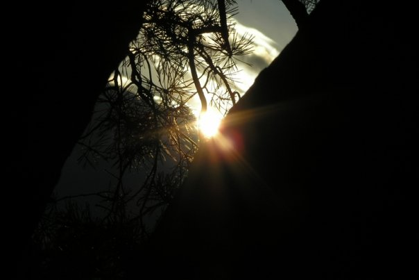 Amber sunset in the pine forest
