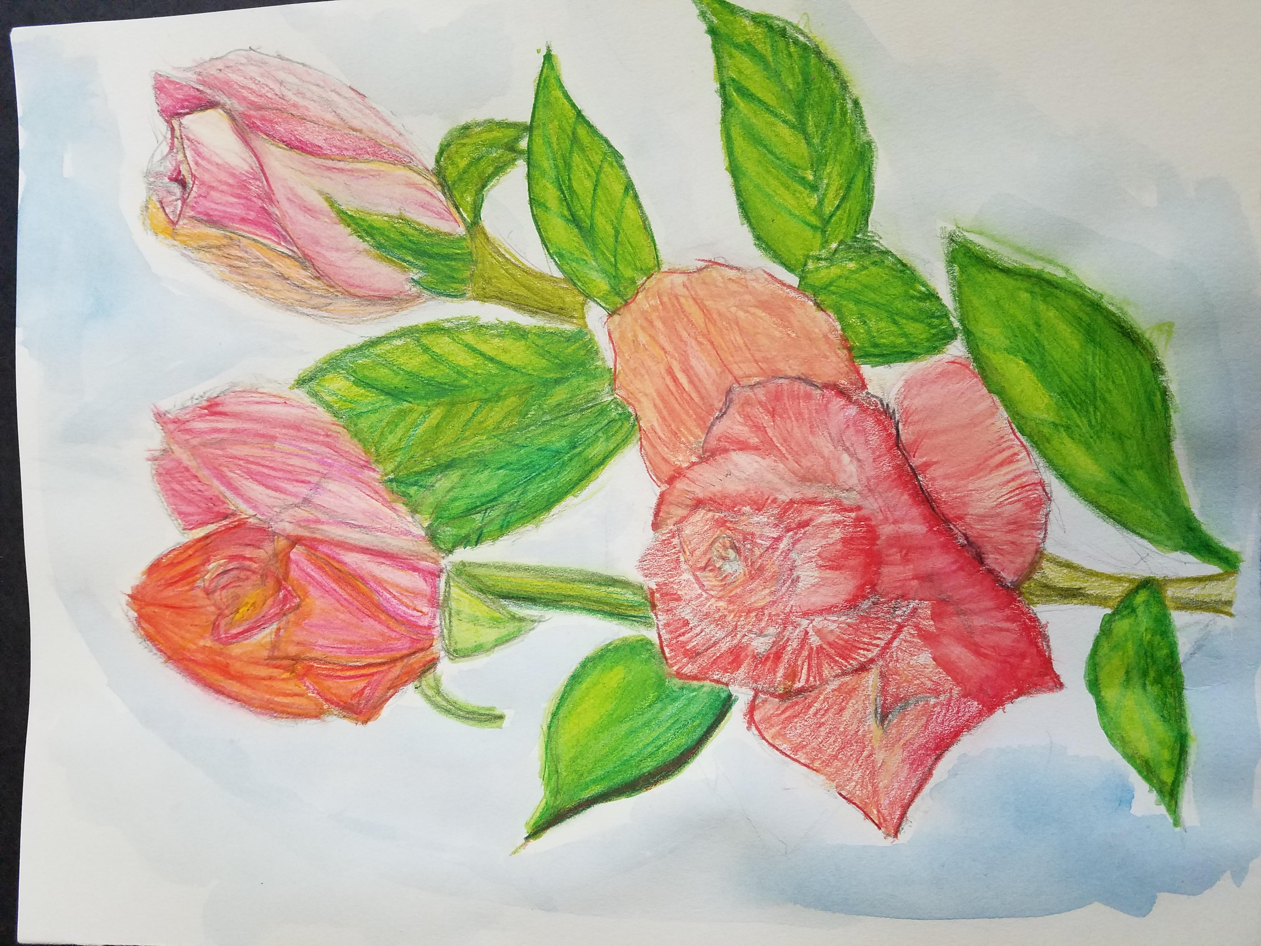 Roses Watercolor Pencil- Teen