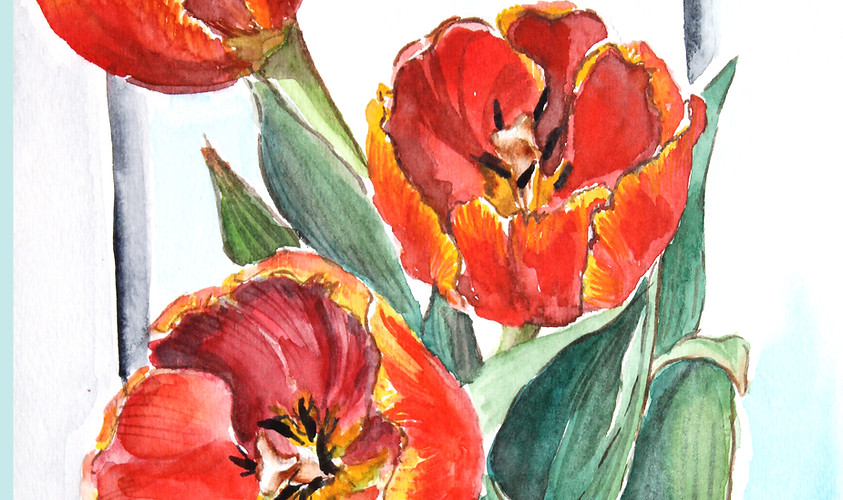 Tulips Of Early Spring