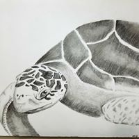 Turtle Art - Teen