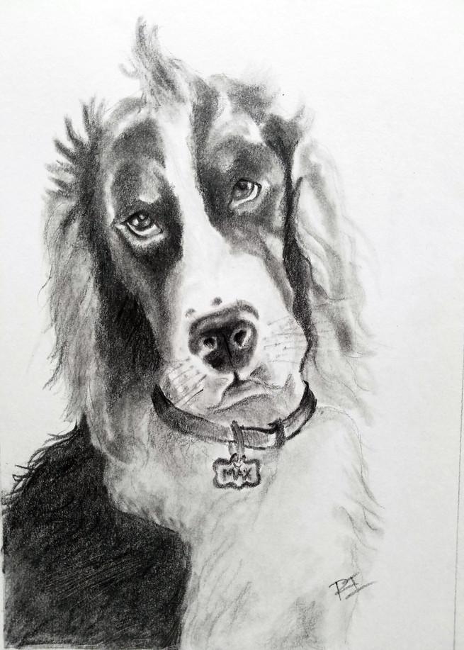 Max Puppy