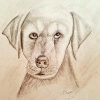Puppy Sketch -Age 12