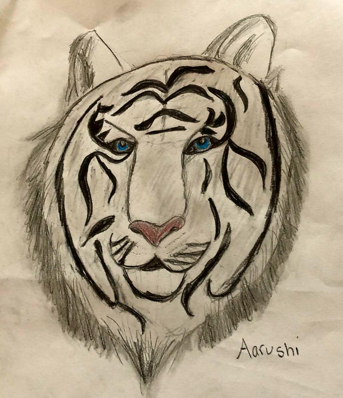 Tiger Drawing - Kid 12
