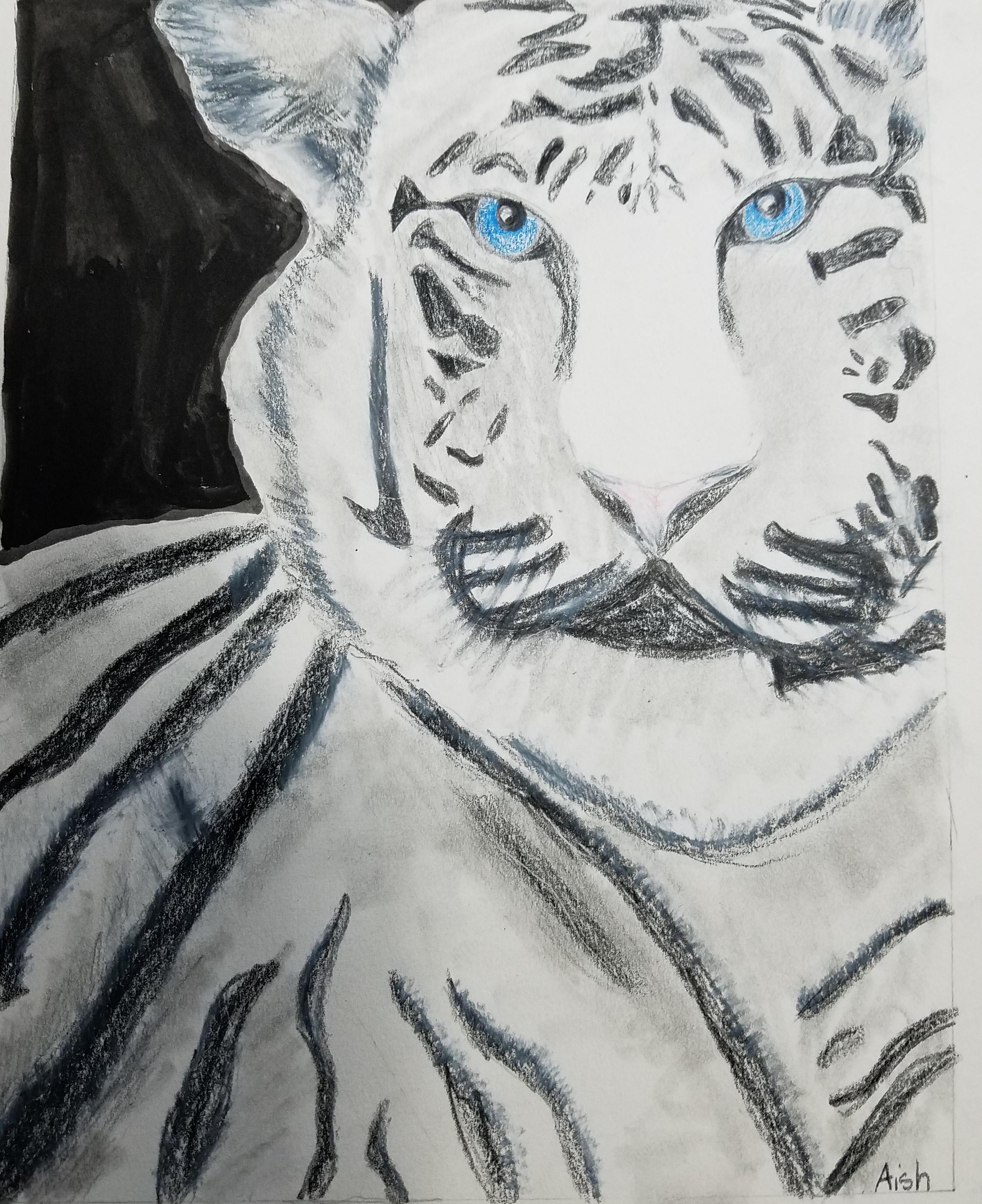 Tiger Drawing- Kid 8