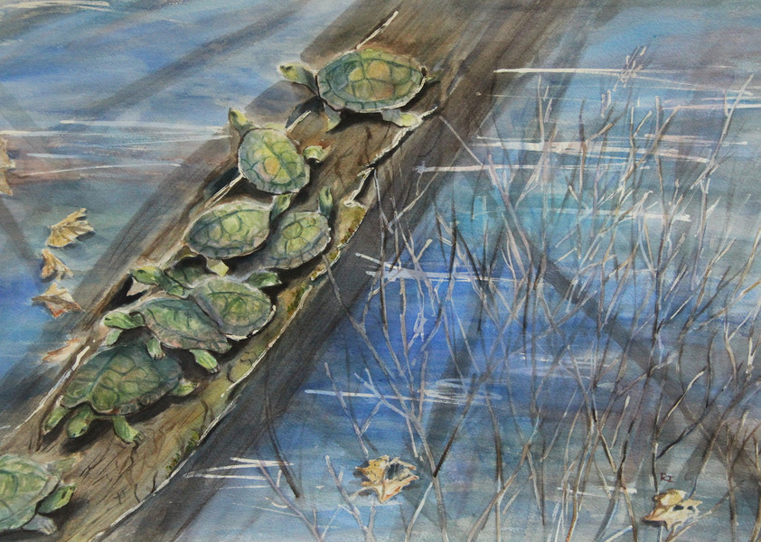 Turtles Of The Ladybird Lake