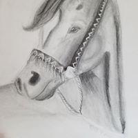 Horse Portrait- Age 11