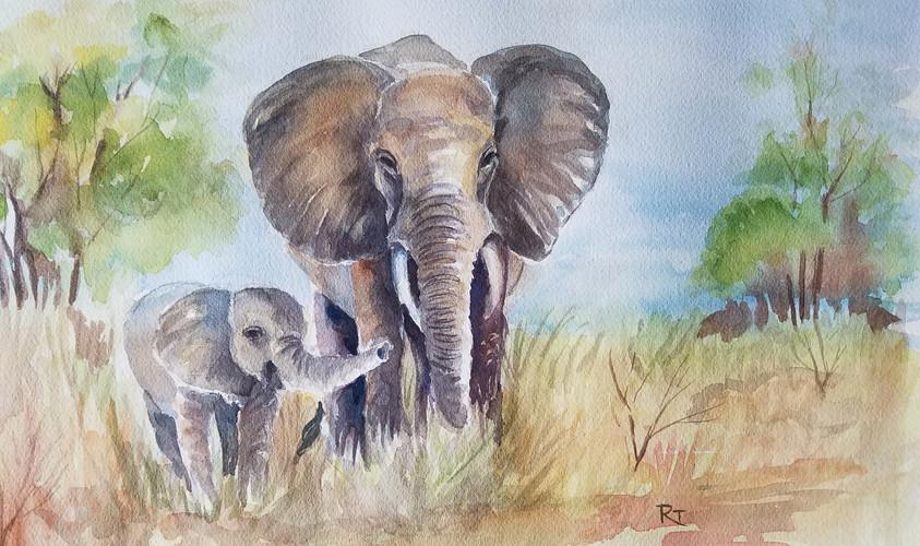 Elephants In Wilderness