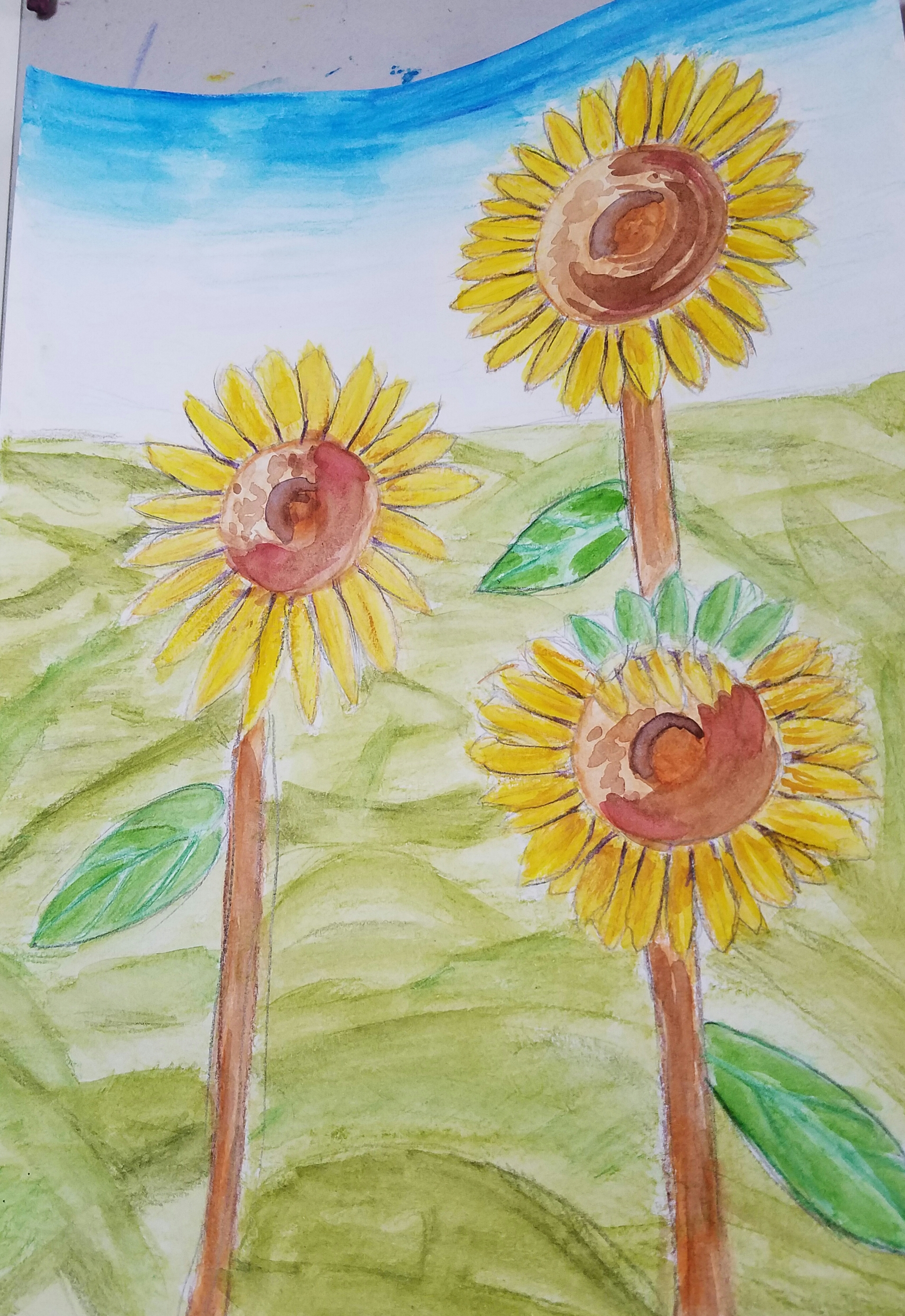 Sunflowers- Age 8
