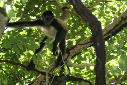 Monkey around LOL