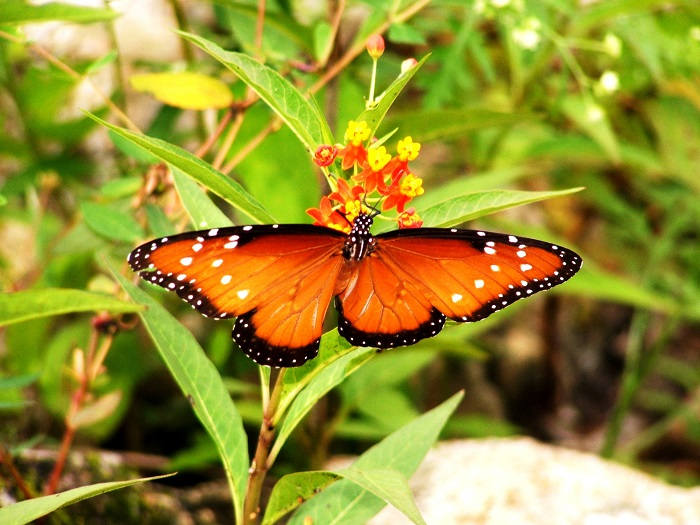 ECOPATH BUTTERFLY