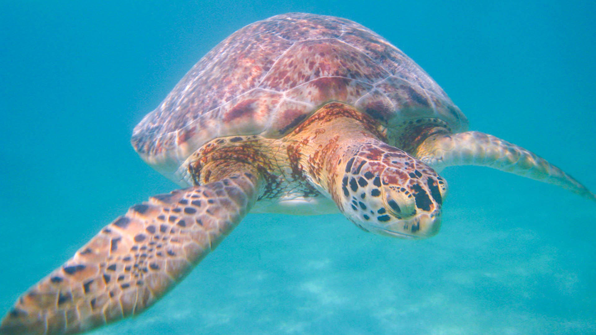Snorkel Tulum