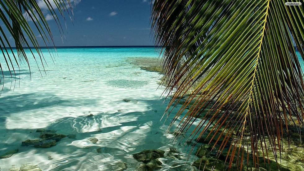 Free-Desktop-Tropical-Background.jpg