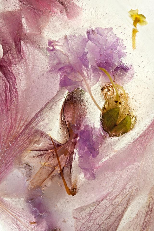 09_Ice Blossom#02_by_Pam_Murphy.jpg