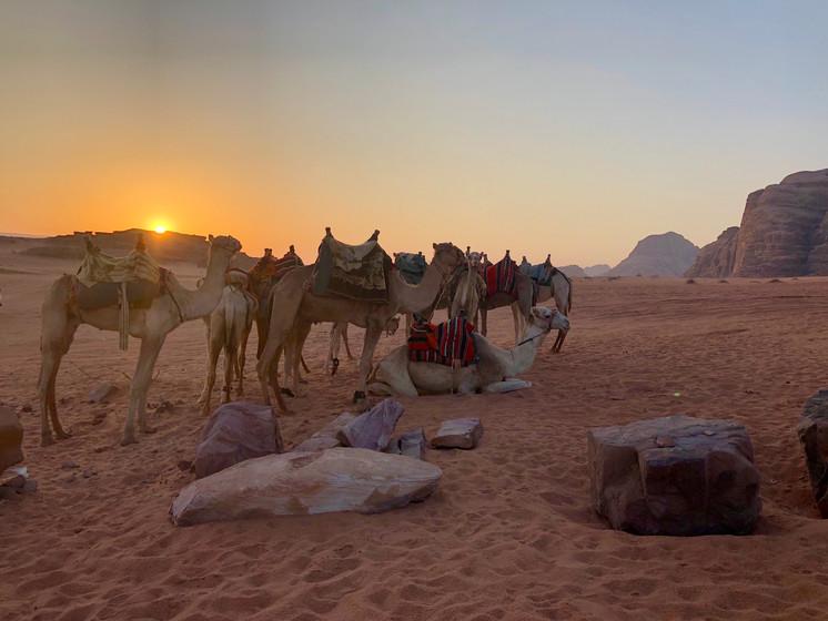 Ron Switzer Wadi Rum sunrise.jpeg