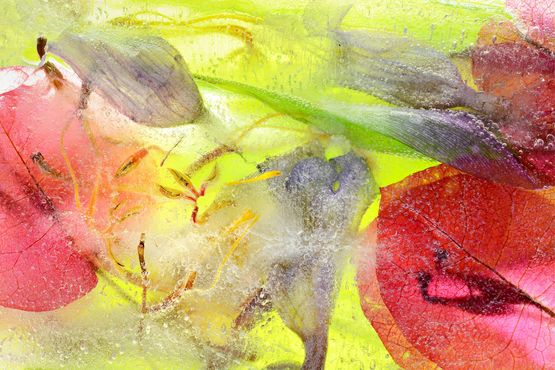 08_Ice Blossom#01_by_Pam_Murphy.jpg