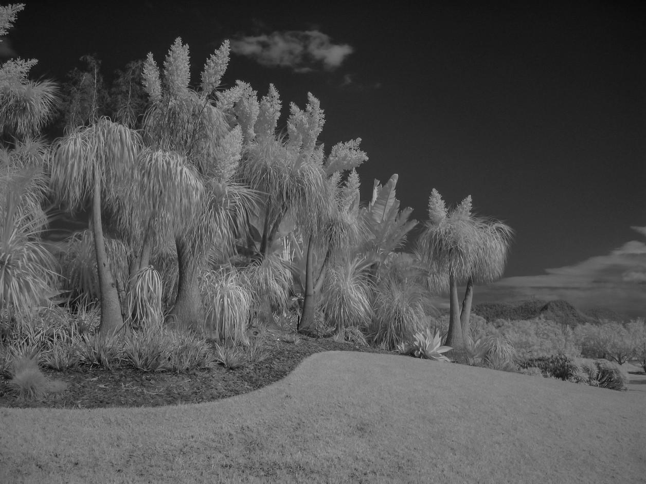 Hunter Valley Gardens.jpg