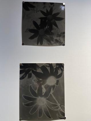 darkroom_39jpg