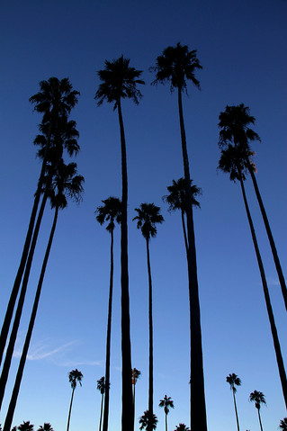 Palms by Andy Rogers