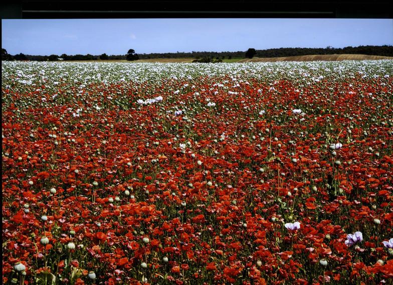 Tasmania010.jpg
