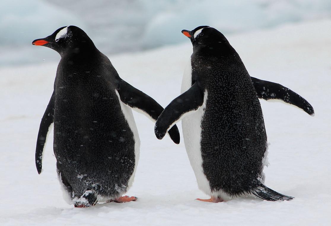 AntarcticaD.JPG