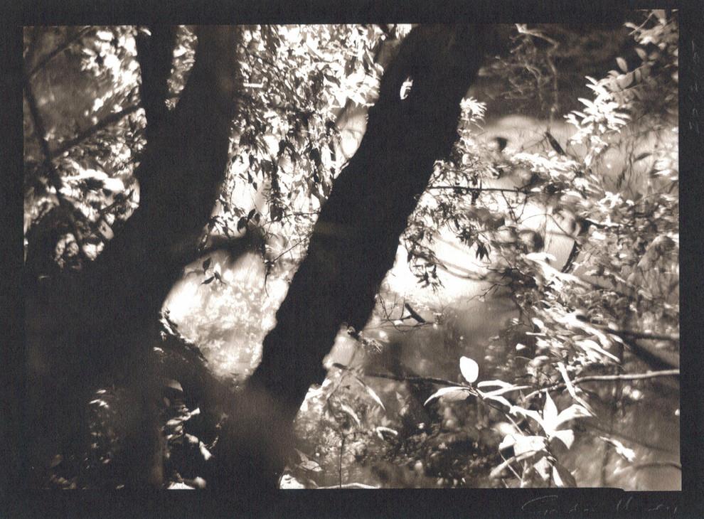 figments #8 by Gordon Undy