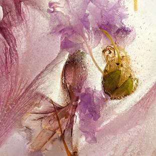 Pam Murphy Ice blossom no 3 $395