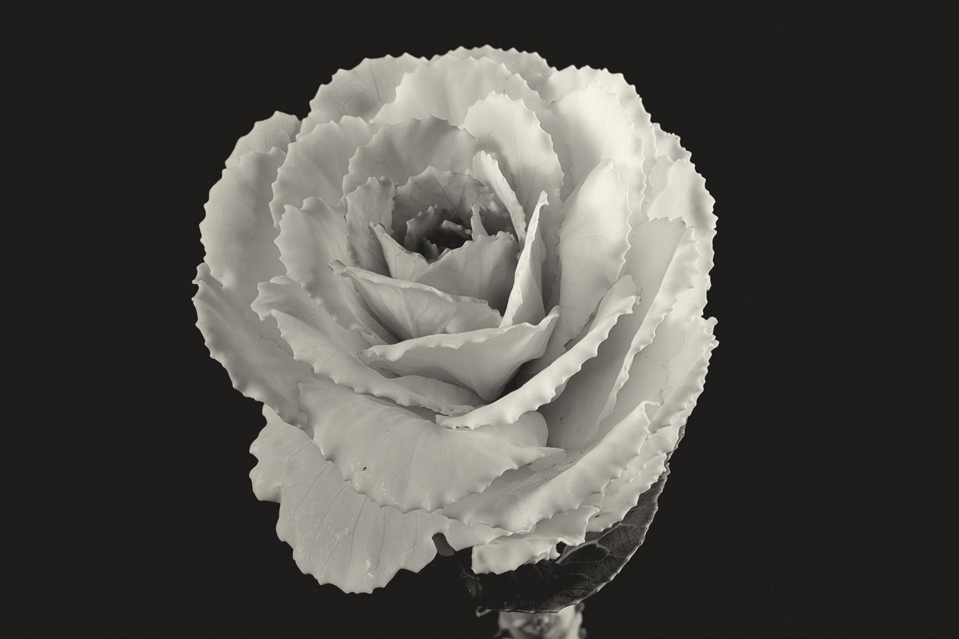 Flower Cabbage Flower-1.jpg
