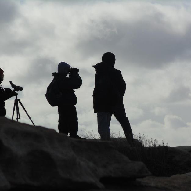 Kevin_Braganza_birdwatching