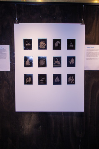 darkroom_46jpg