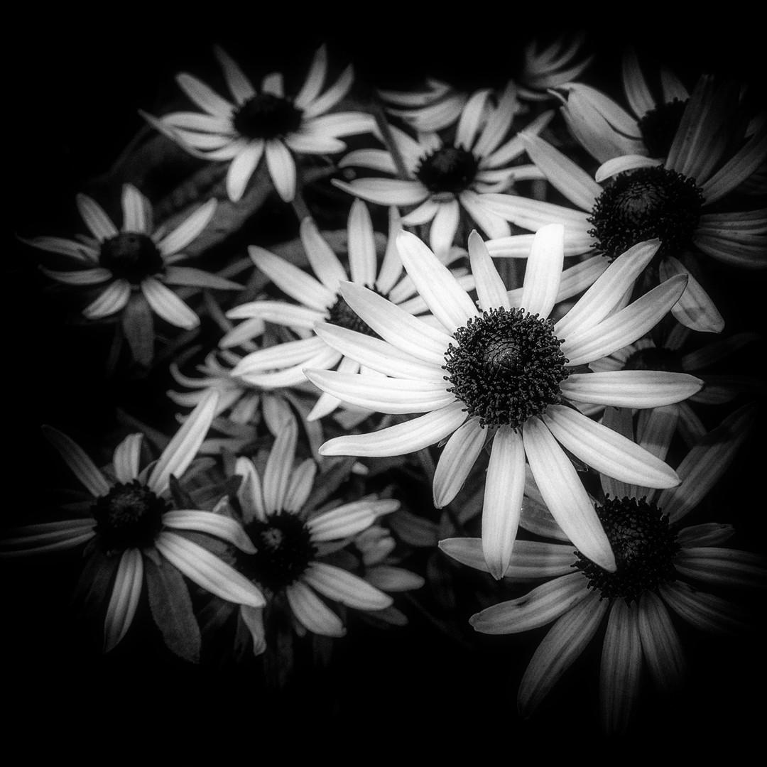 Flora 8