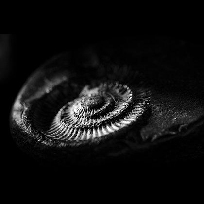 Fossils 2