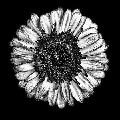 Flora 26