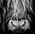 Animal 01small sq.jpg