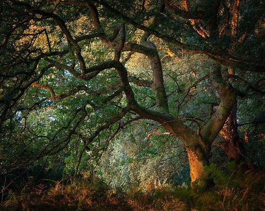 Landscape Colour 2