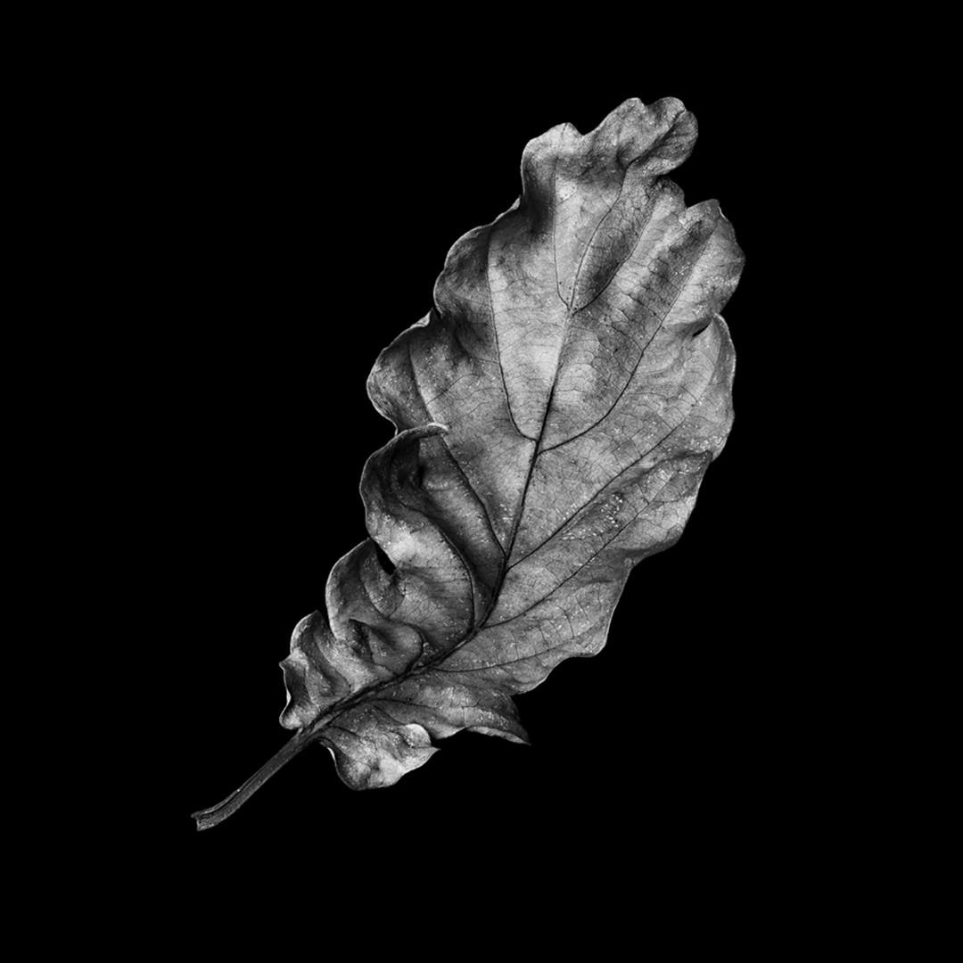 Flower 23.jpg