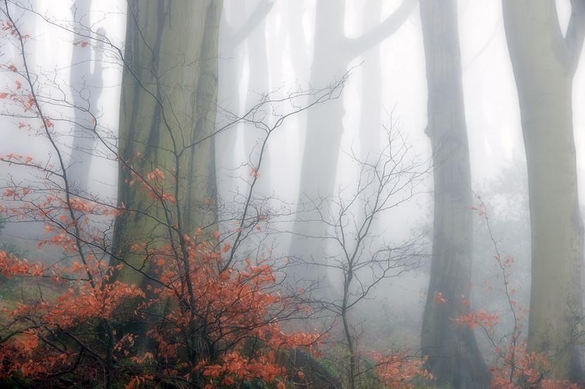 Landscapes- Colour 5