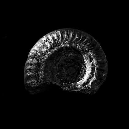 Fossils 5