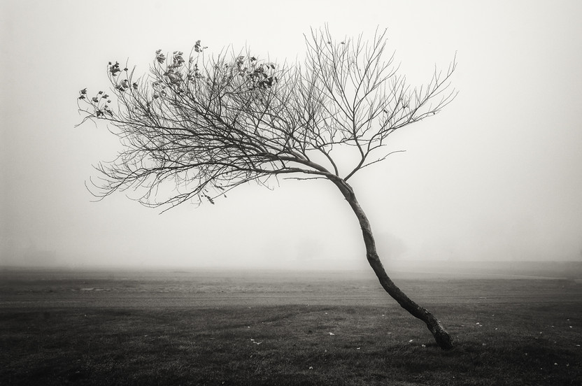 Landscapes- B&W 19