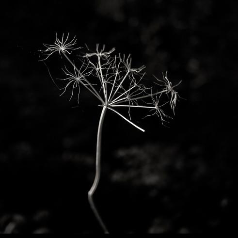 Flower 25.jpg