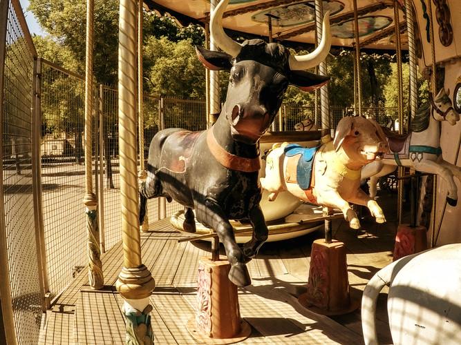 Carousel 7