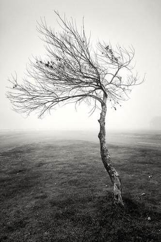 Landscapes- B&W 17