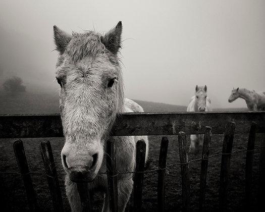 Animals 19