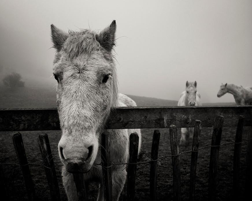 Animal 19.jpg