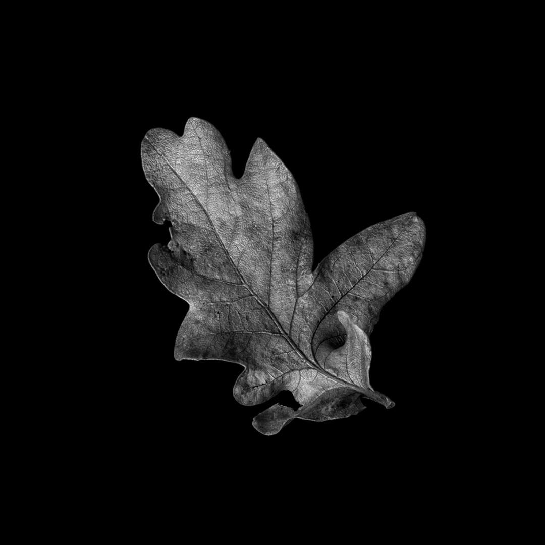 Flower 24.jpg