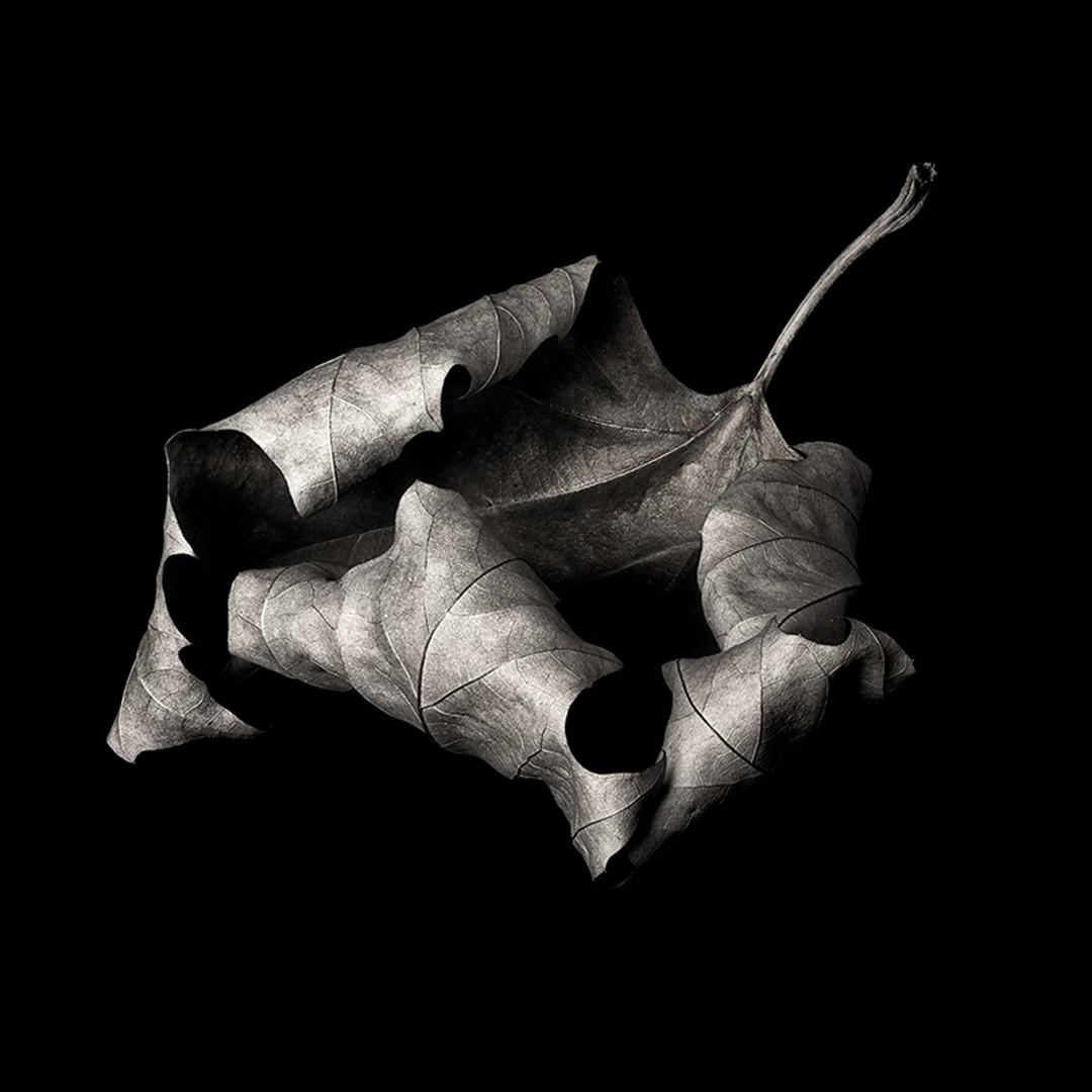 Flower 21.jpg