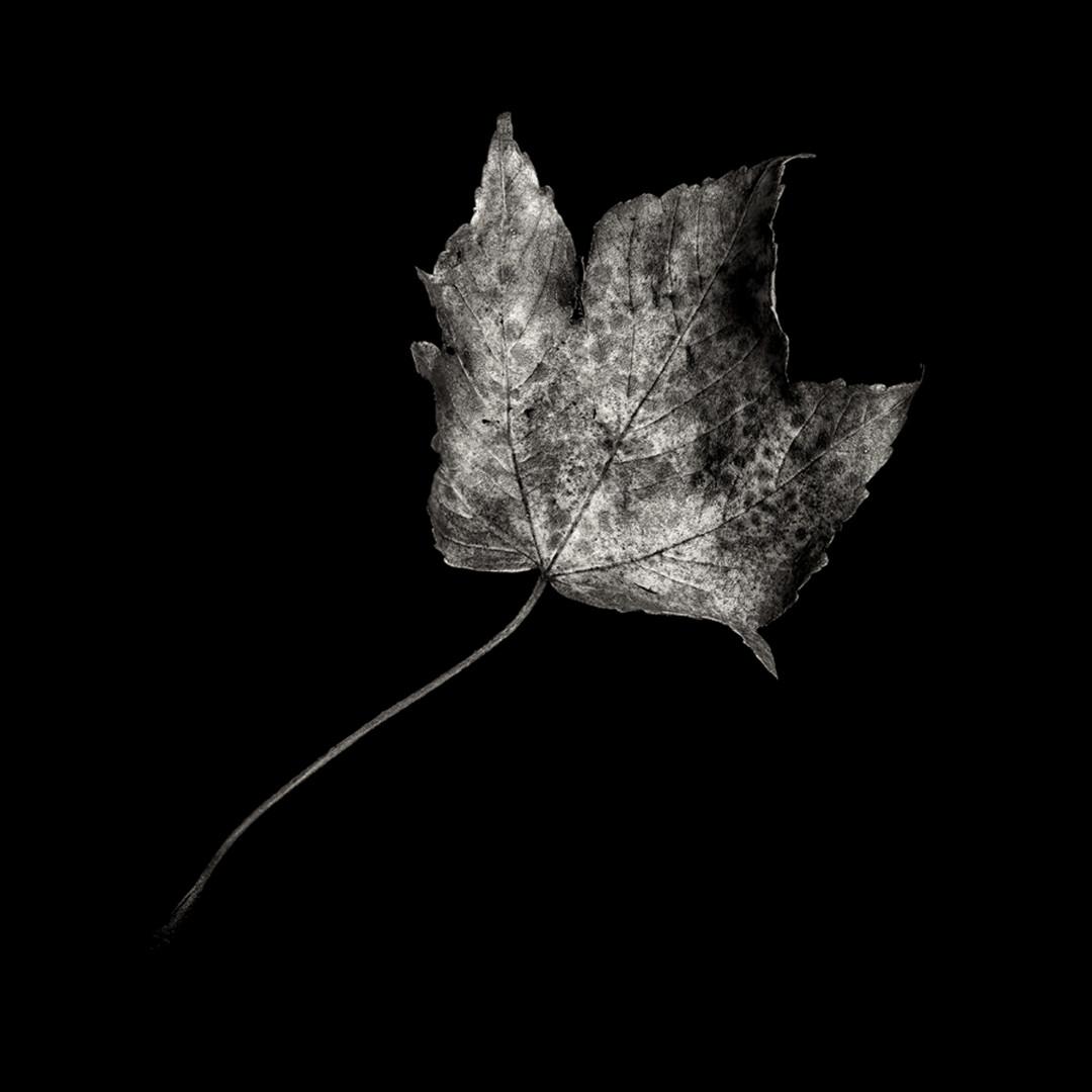 Flower 22.jpg