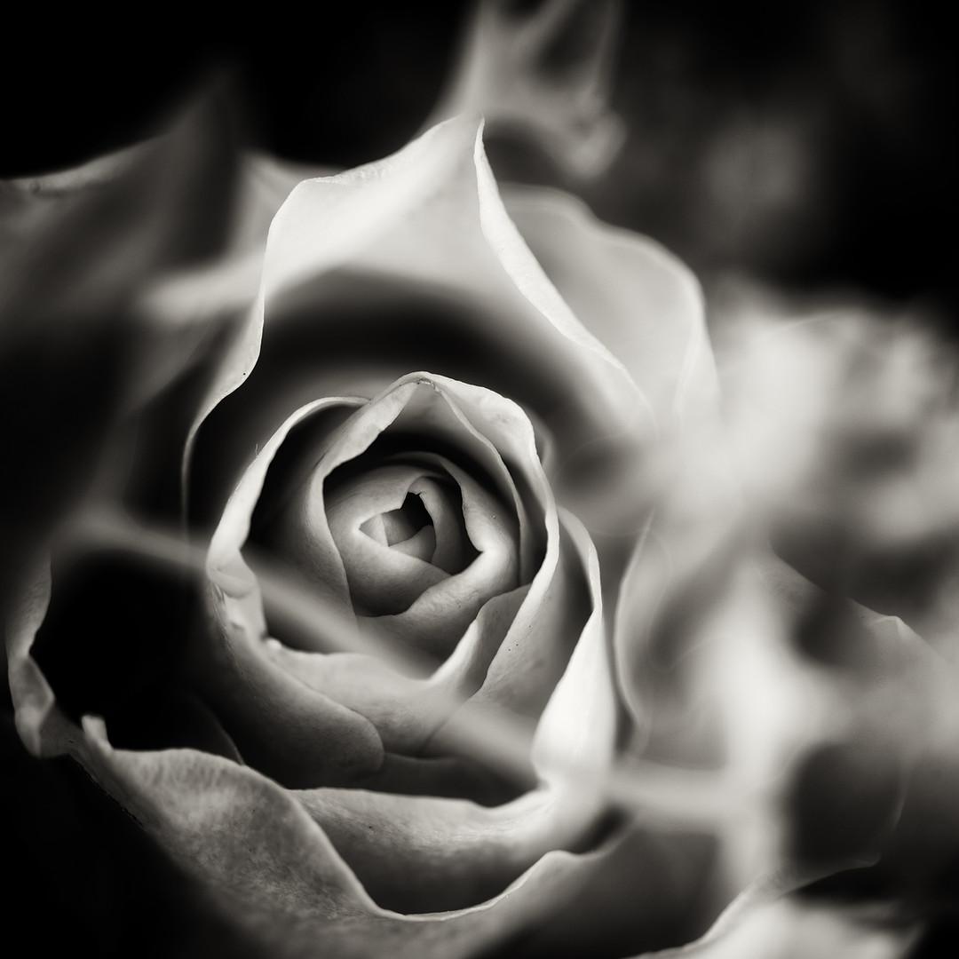 Flower 17.jpg