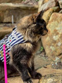 Kitten Jacket