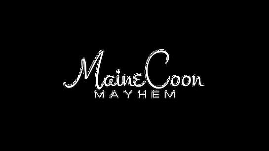 MAINECOON MAYHEM PNG.png