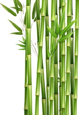 vector-green-bamboo-stems-leaves-isolate